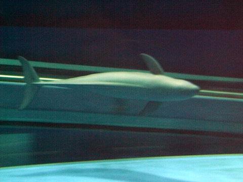 RIMG7520.JPG